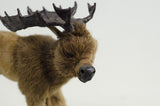Little Critter Moose