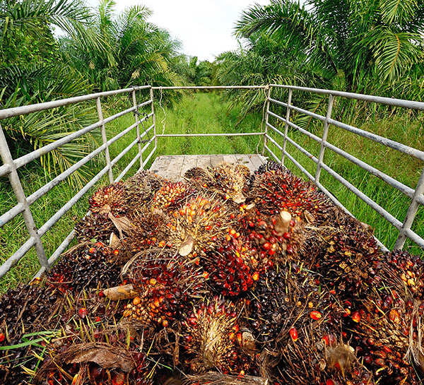 How to cut down on your palm oil consumption