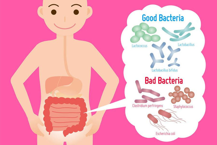 Dr. Robins' 7 Tips on Choosing the Best Probiotic For A Happier Gut