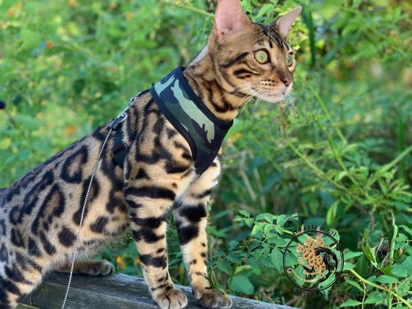 Army Camouflage Cat Harness Cat Harness Mother of Bengals