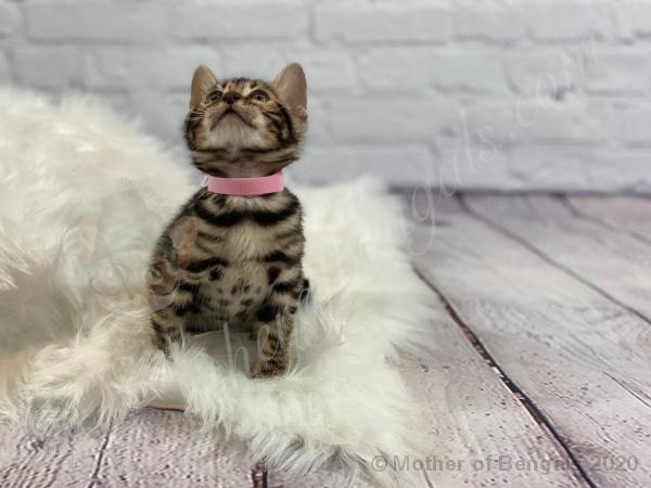 Pink Girl 💗 Mother of Bengals