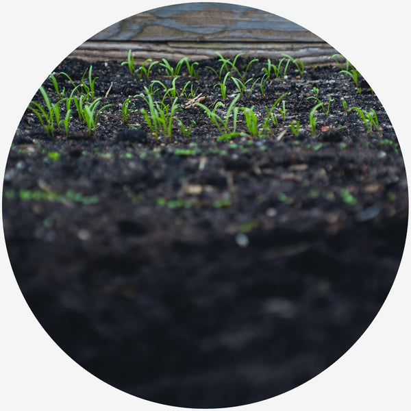 Green leaf plants sprouting from black soil