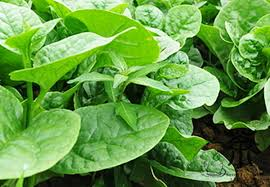 Grow Your Green Leafy Vegetables!