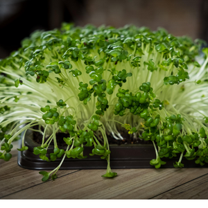 Cauliflower Microgreens Seeds