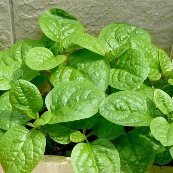 Green Leafy Vegetable seeds (5 in 1)