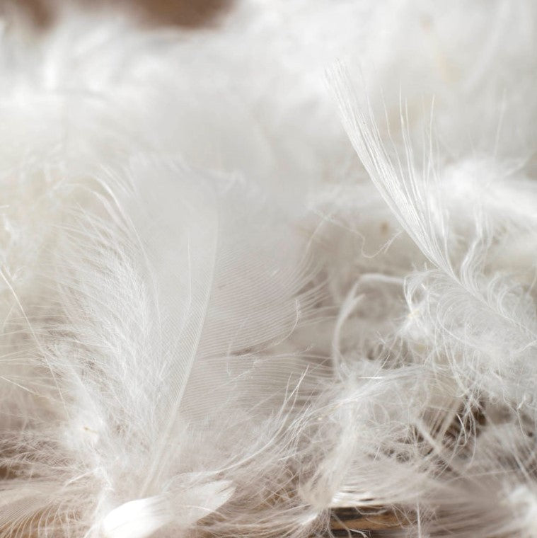 Luxury Hungarian Goose Feather & Down OVERSIZED Pillow Pair