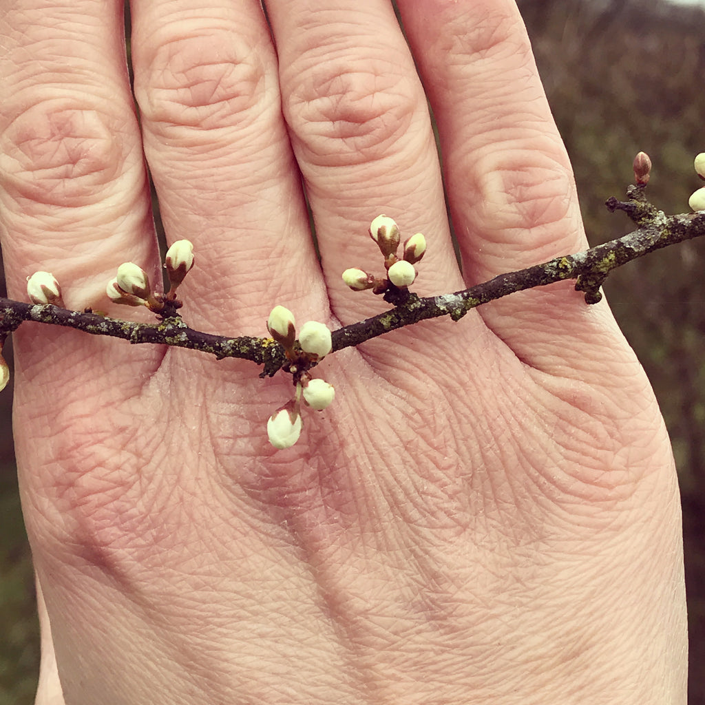 Using nature as inspiration by Sue Lane Jewellery