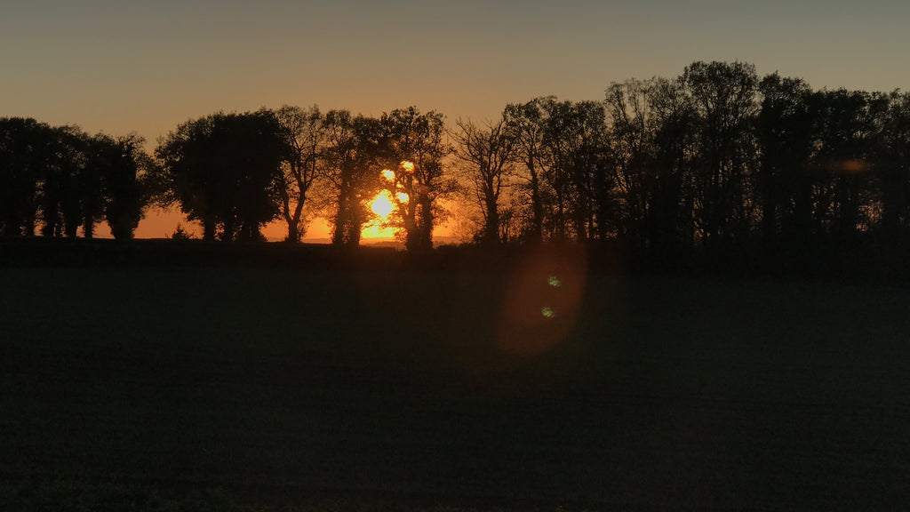 Sunset over the woodland in Herefordshire