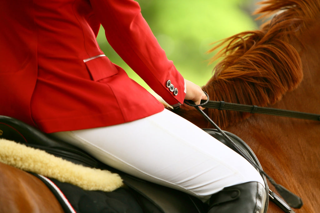 The ultimate solution for equestrian saddle sores