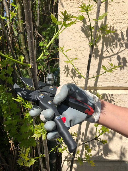 The garden shear is perfect for all your pruning and gardening jobs !  Will make the job easier  gives a great fit especially smaller   hands or hands that are older or arthritic
