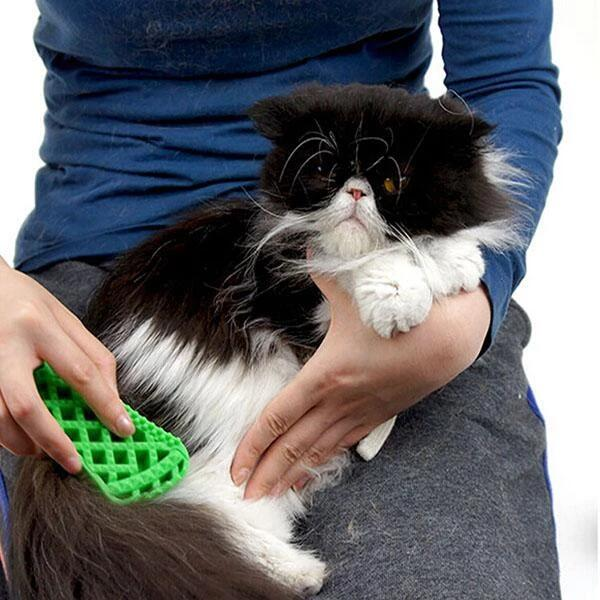 Massage pet brush