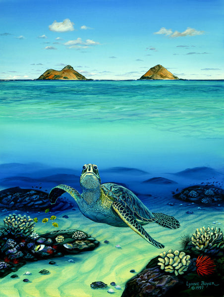 Honu At Mokuluas Art Print