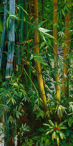 Manoa Jungle I - Bamboo