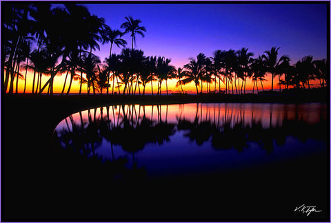 Tropical Reflections Photograph