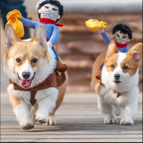 Ride Cowboy Dog Pet Costume