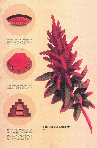 hopi red dye amaranth by kristen howlett