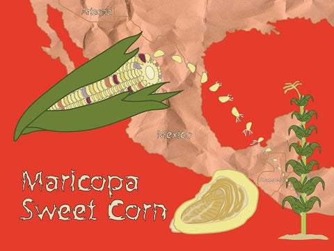 Maricopa Sweet Corn by Suzanne Carlson