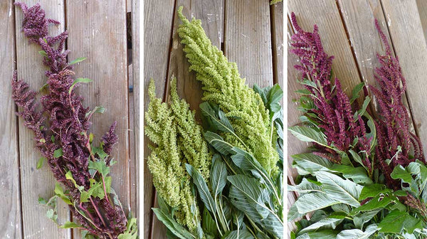 types of amaranth
