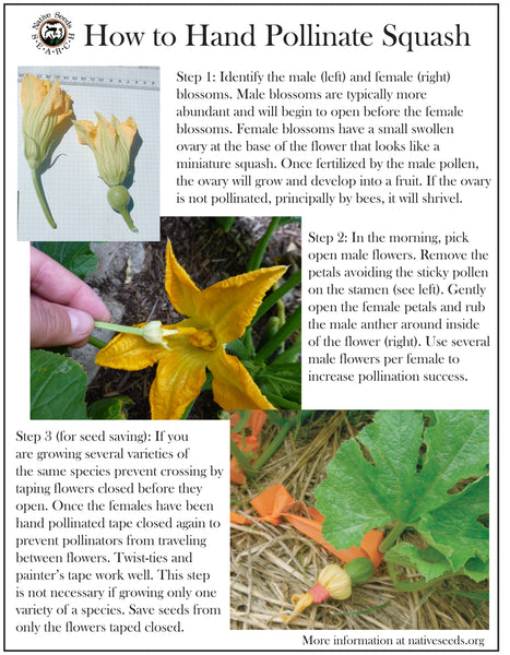 how to hand pollinate