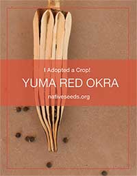 yuma red okra