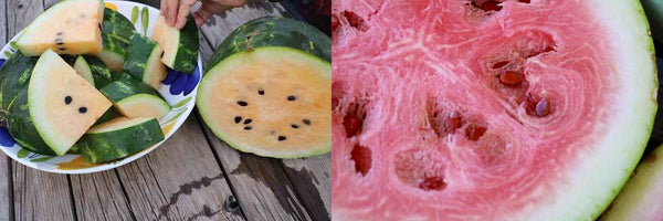 tohono o'odham yellow meated and navajo red watermelon