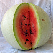 Navajo Winter Watermelon