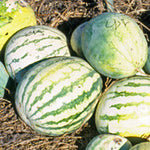 watermelon native to the desert