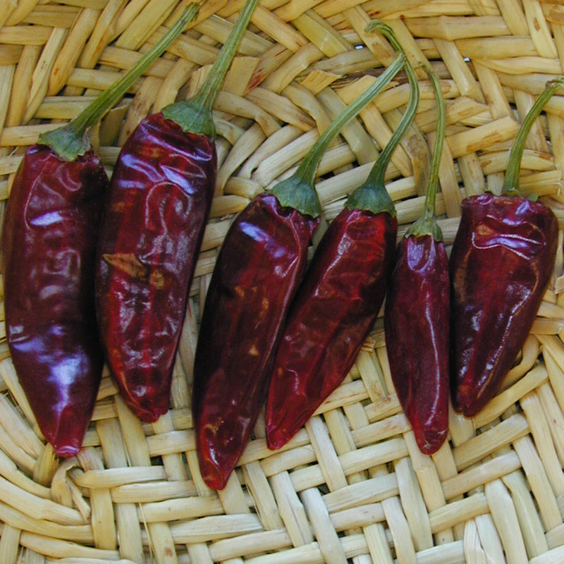 smooth red chile with medium hot flavor