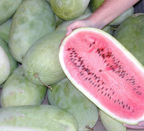 arid adapted watermelon