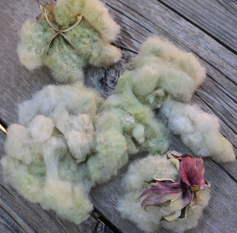 Davis Green Cotton