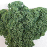 Dwarf Siberian Kale.. Winter hardy and good for small gardens.