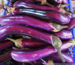 Asian style eggplant that produces bright purple narrow fruits. They love heat and are drought tolerant.