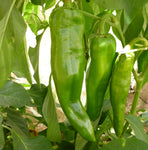 Chiles/Peppers