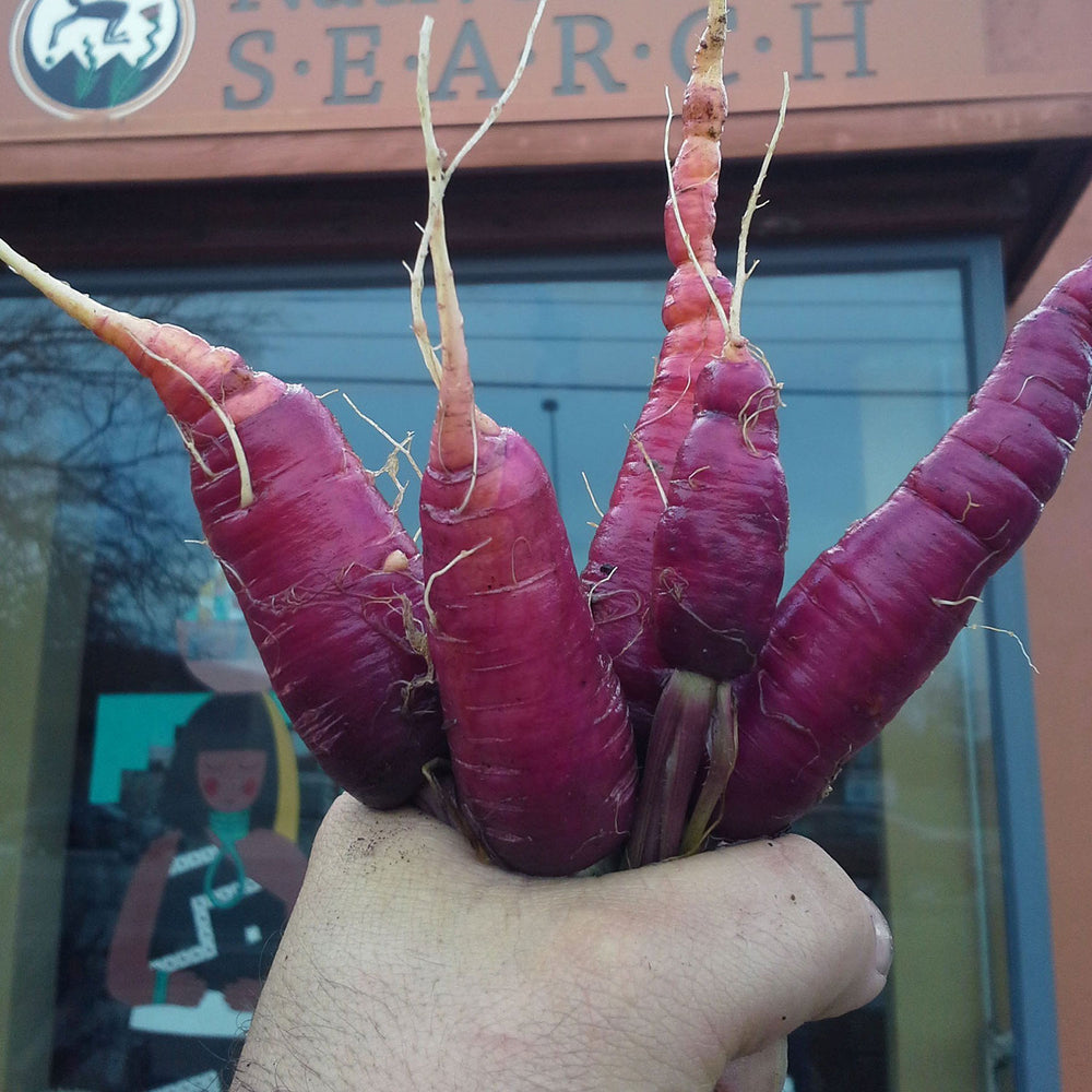 dragon purple carrots