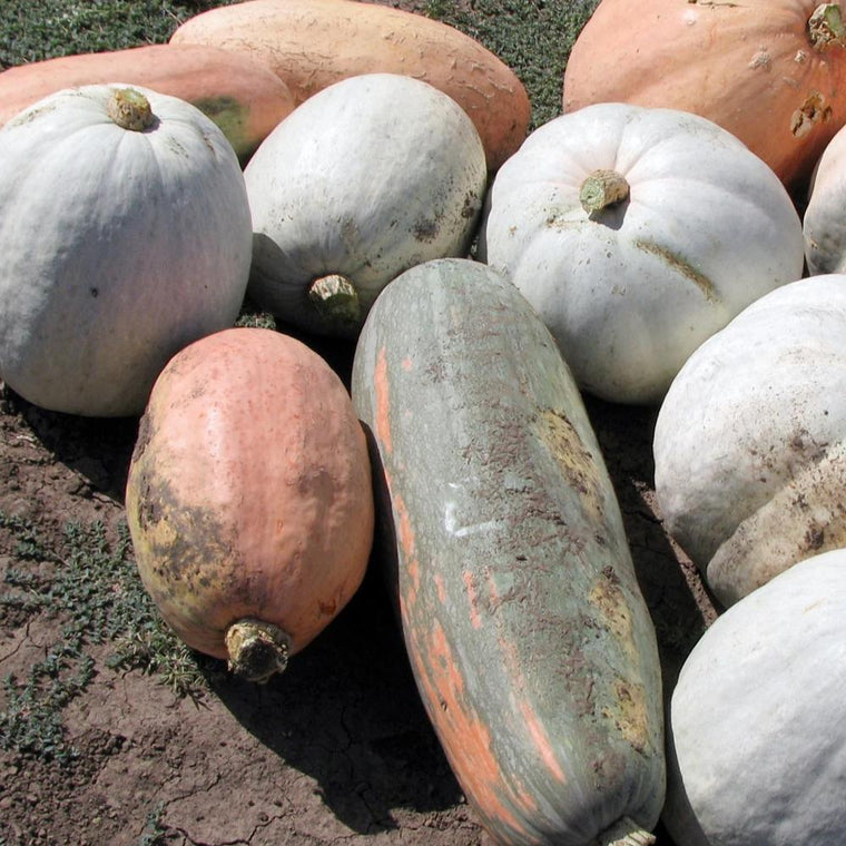 Escondida Calabaza