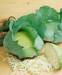 Starter - Cabbage - Premium Late Flat Dutch