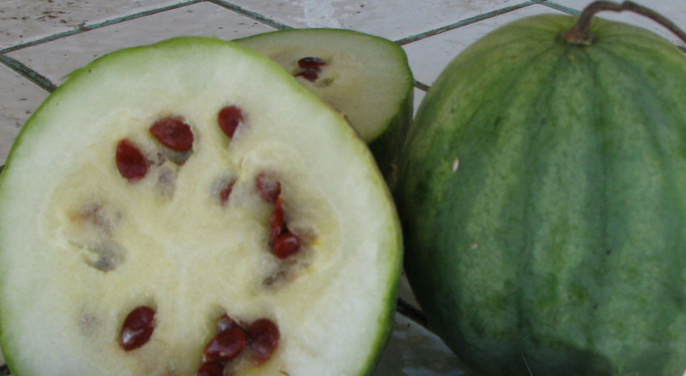 watermelon seeds - plant produces yellow flesh with red seeds flavor is light and not very sweet