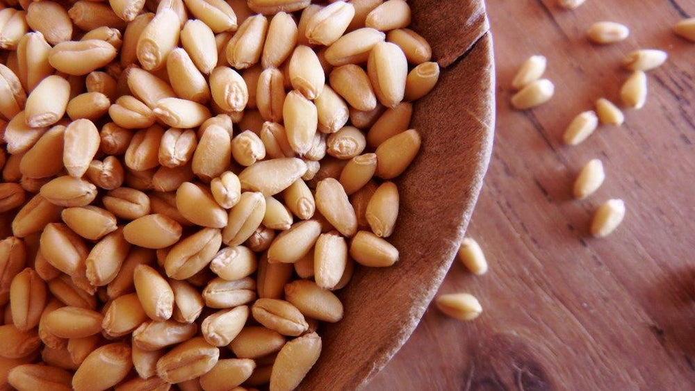 Organic Pima Club Wheat Berries (OLAS PILKAN, heirloom soft)