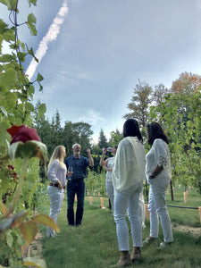 Private Vineyard Tour w/Extended Wine Tasting