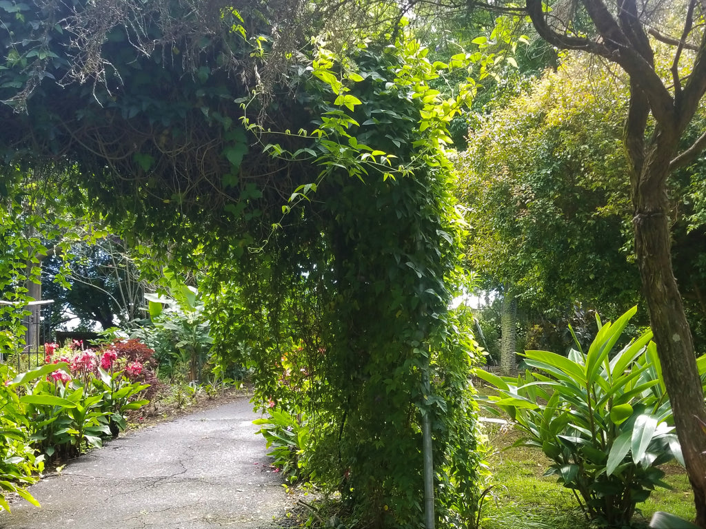 Wander the Enchated Floral Gardens of Kula