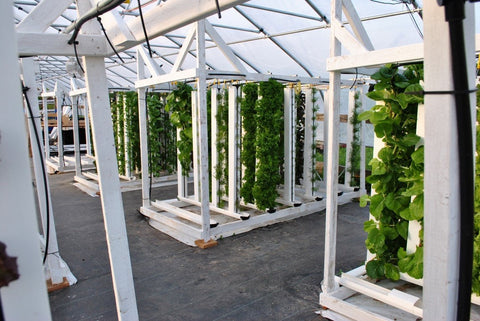 Vertical Farming Advantages and Disadvantages