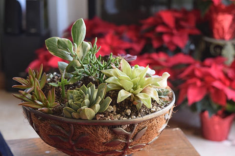 succulent plants arrangement