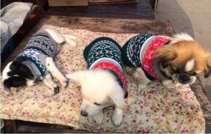 Best Snow flower Cat Sweater