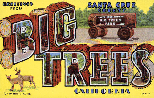 Greetings from Big Trees California