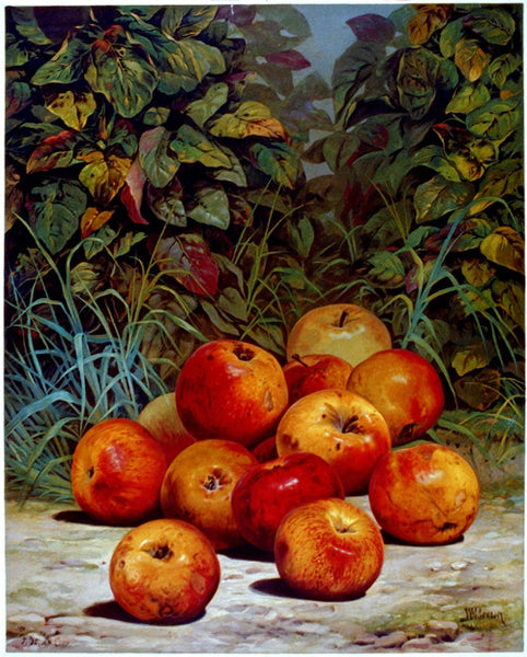 Currier & Ives Apples