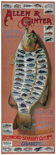 Advertisement for Allen & Ginter Virginia Brights Cigarettes. 50 fish from American Waters.