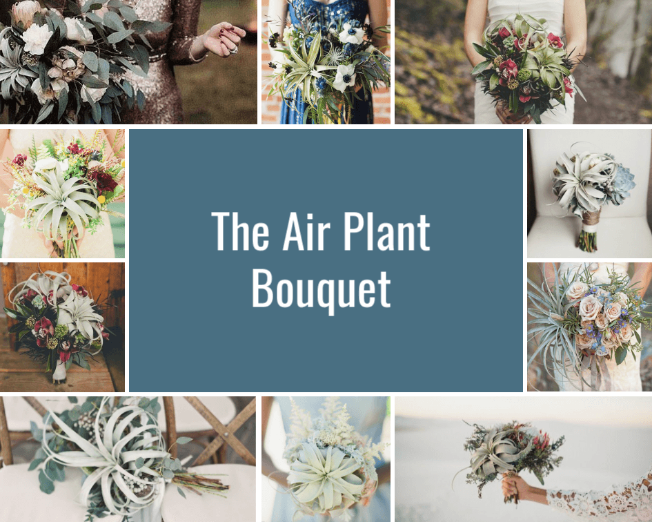 Air Plant Weddings: The Air Plant Bouquet