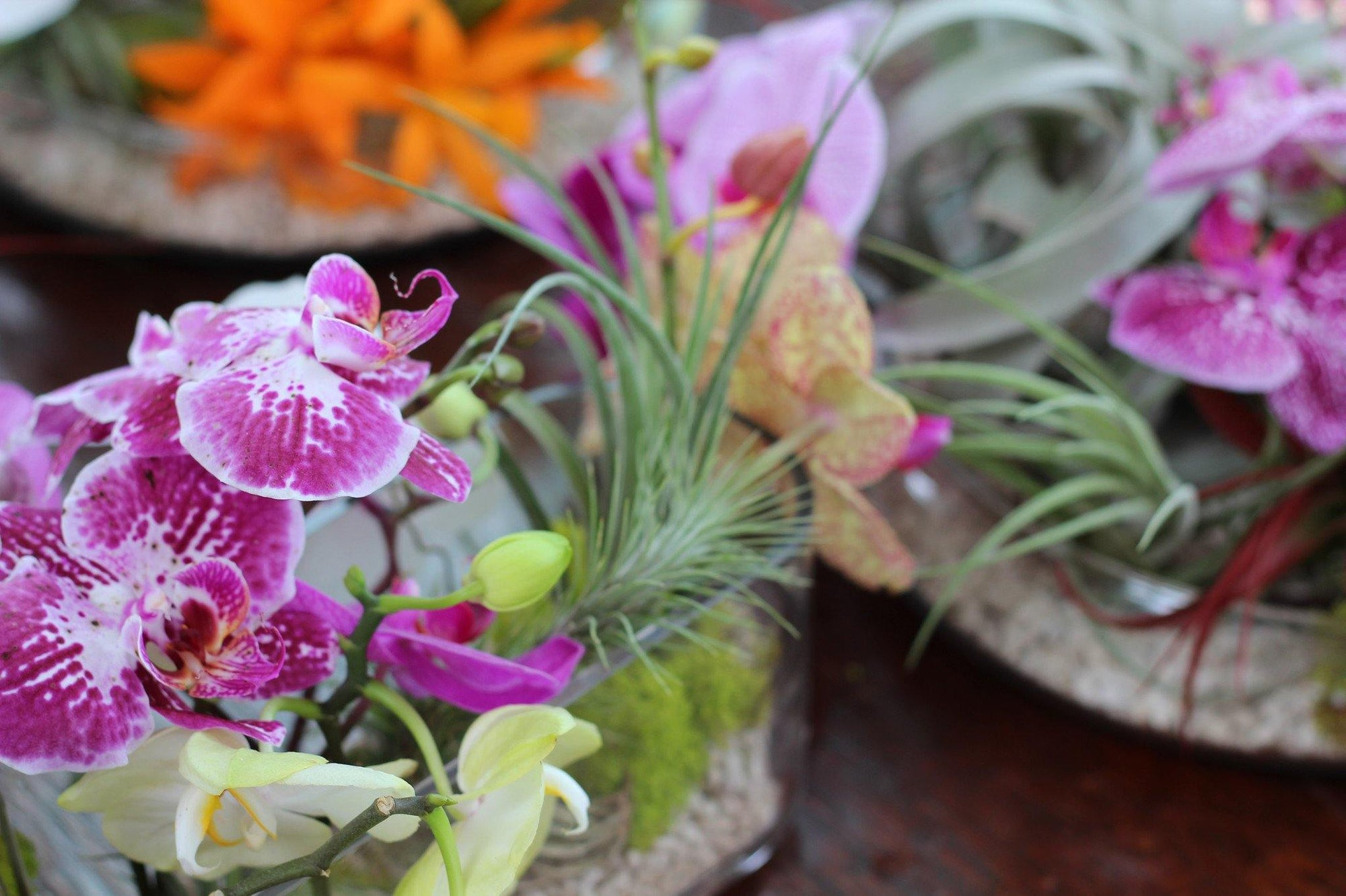 What's Your Air Plant Wedding Style: The Beach Wedding