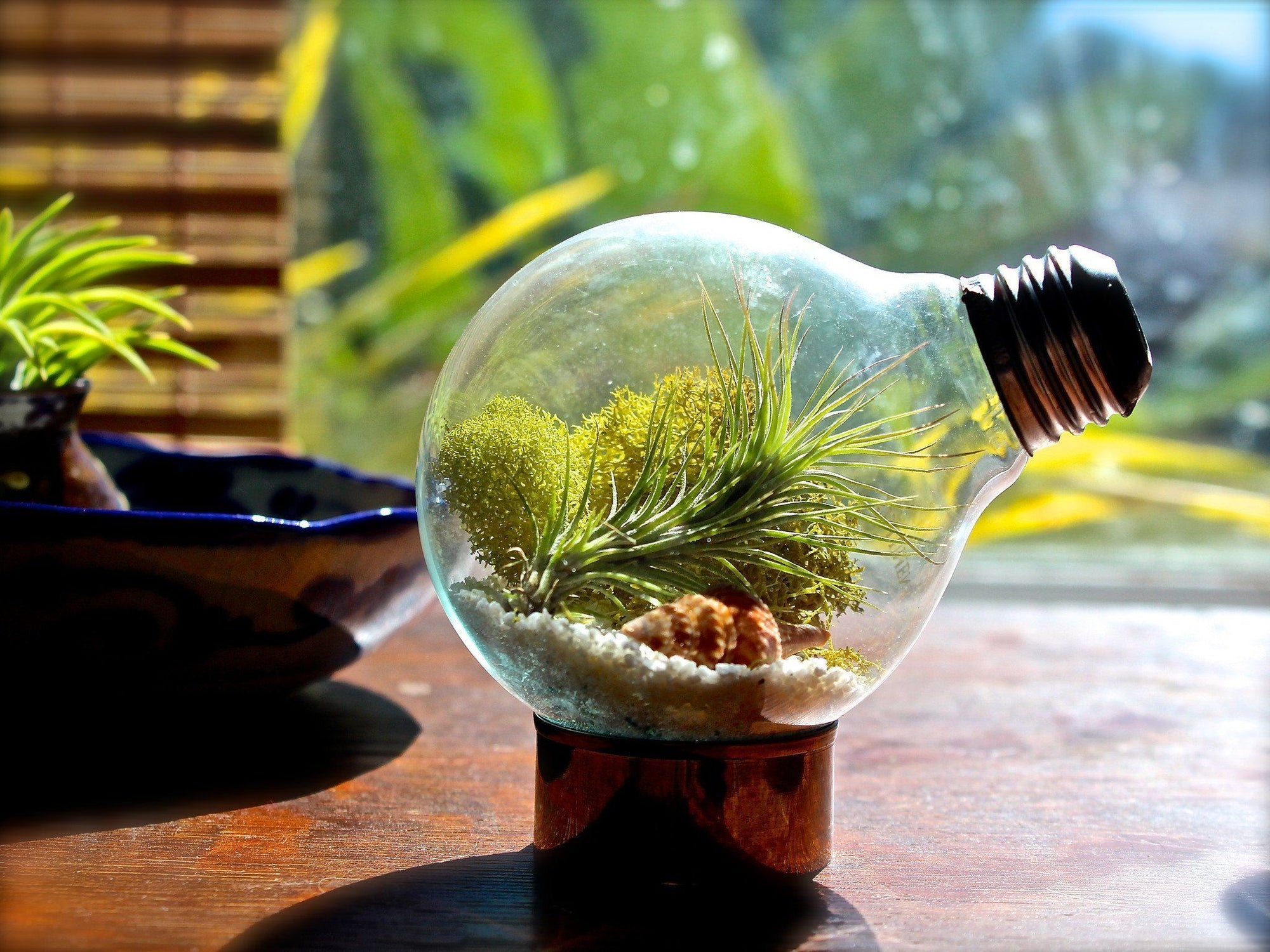 Giving New Life to Old Things With Air Plants