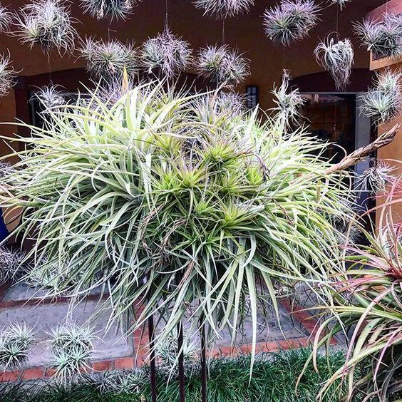 Caring for Air Plants in the Winter Months